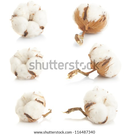 Cotton plant over white background collage