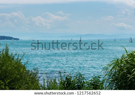 Countless sailing boats on blue water of lake behind green plants