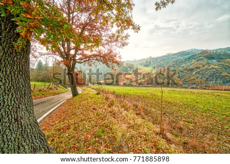 Country asphalted road running in autumn landscape in warming orange cast, colorful natural background