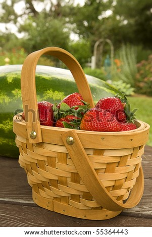 Country basket filled with big juicy strawberries and a watermelon beside it.