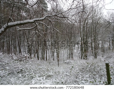 Country, countryside, snowy, white, frost, frozen, cold, Christmas, winter, cold, nature, landscape, panorama, tree, brown, black, snowflake, snow flake, snowflakes, flake, flakes, sky, blue, ice, icy #772180648