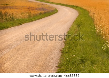 Country dirt road in a wheat field
