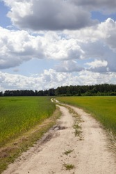 Country dirt road in the field. summer time of year. landscape with forest and blue sky with clouds