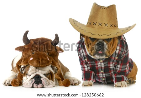 country dog - english bulldog dressed up like a farmer and a bull isolated on white background