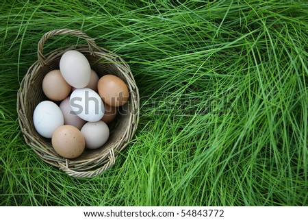 country eggs basket in the green grass