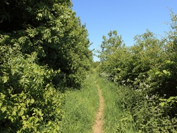 Country footpath surrounded by hedgerows and trees in summertime