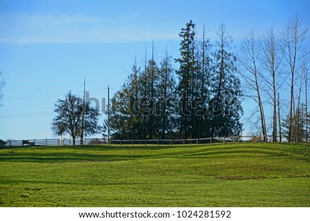 Country grass grazing field with wooden fence distant horses fir trees blue sky