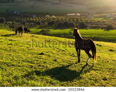 country landscape at sunset with horses