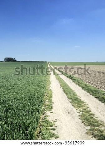 country lane across farmland in the cambridgeshire fens