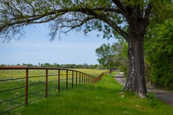 country lane and fence with yellow flowers