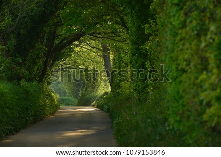 Country lane, Jersey, U.K. Telephoto image of a quiet rural road.