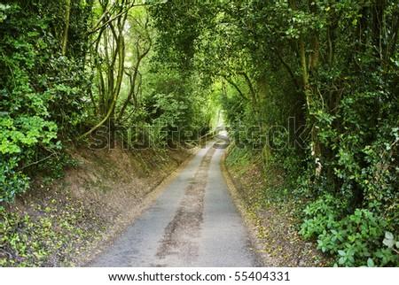 country lane  warwickshire midlands england uk