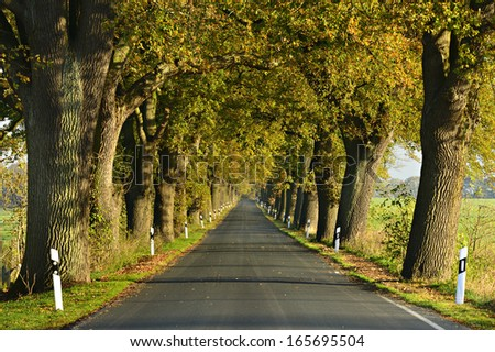 Country Lane with Old Oak Trees on Both Sides