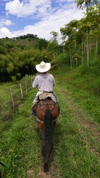 Country man in Colombia, riding his horse with pink cedar plantation, Acrocarpus fraxinifolius in Quindío