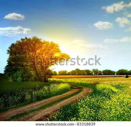 Country road and fields on the background of the blue