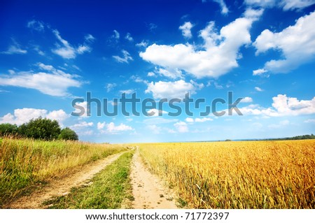 Country road beside wheat field