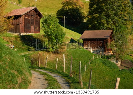 Country road between the old wooden barns and autumn trees in Swiss Alpine village Wengen.