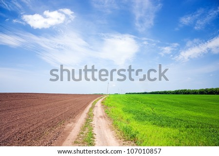 Country road between the plowed field and a field of green wheat