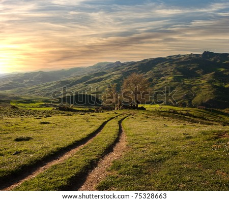 country road crosses the green valley in the sunset
