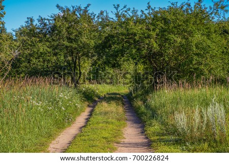 Country road going through the  branches of trees. Take a look better and you will see the shape of lovers heart.   #700226824