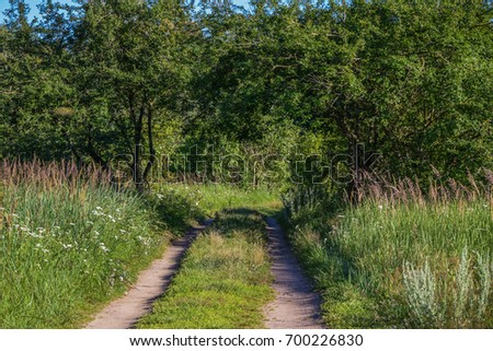 Country road going through the  branches of trees. Take a look better and you will see the shape of lovers heart.   #700226830