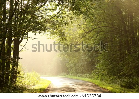 Country road in a deciduous forest on a foggy September morning.