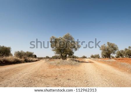 Country road in an agricultural landscape. Photo taken in Brea de Tajo, Madrid Province, Spain