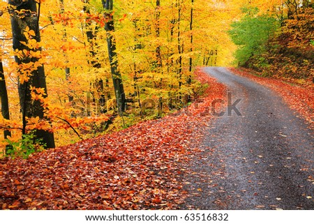 Country road in autumn landscape