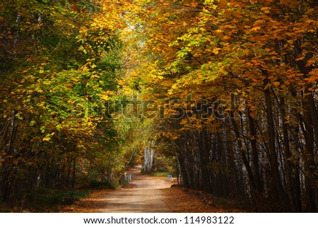 Country road in autumn wood.