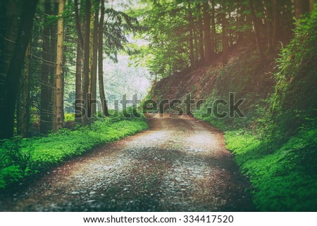 Country road in mountain forest in summer. Scenic natural background. Vintage effect.  #334417520