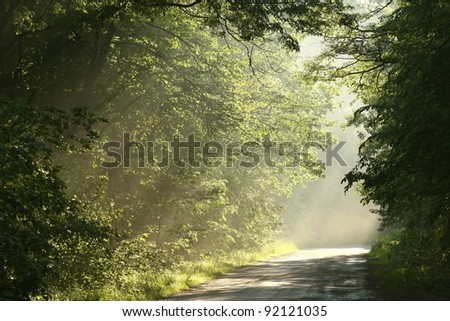 Country road in spring deciduous forest surrounded by fresh green leaves.