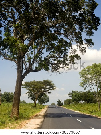 Country road in Sri Lankan national park in the sunshine day