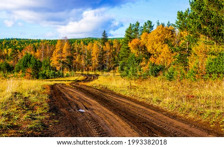 Country road in the autumn forest. Autumn rural road. Rural country road in autumn nature. Autumn forest road