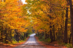 Country road in the Fall with maples