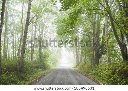 Country Road in the Fog. A rural country road lined with full foliage trees has a welcoming feel to the landscape.