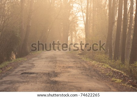 country road in the middle of a forest spring in the morning