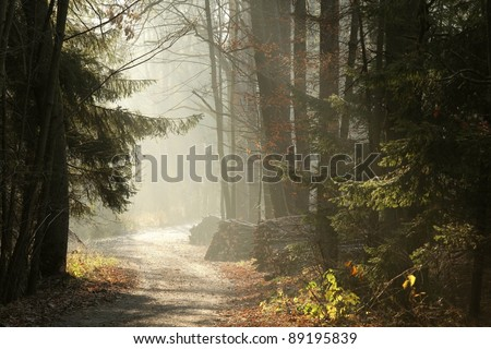 Country Road in the misty late autumn woods at dawn.