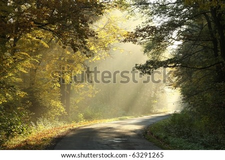 Country road leading through the picturesque autumn forest on a misty morning.