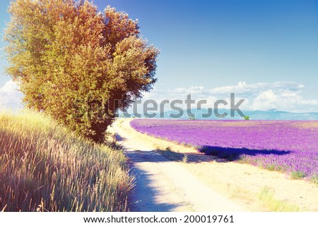 country road near Lavender field. The plateau of Valensole in Provence  - Shutterstock ID 200019761