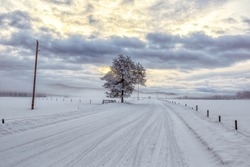 Country road on a frigid morning in winter with a solitary tree and cloudy sky