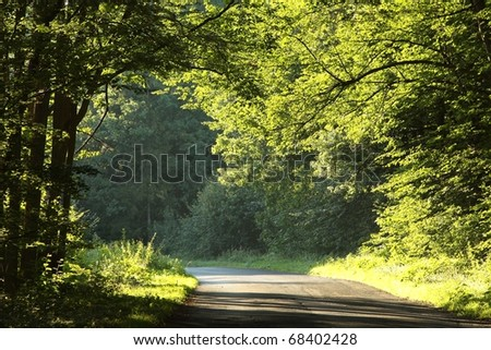 Country road running through the deciduous forest on a early autumn morning.