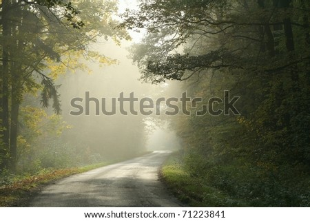 Country road running through the deciduous forest on a foggy morning.