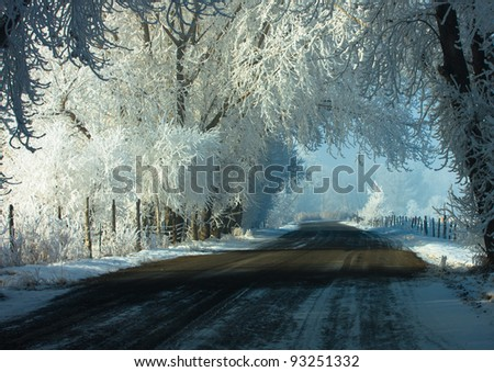 Country Road Surrounded by Hoar-frosted Trees