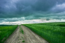 Country road through a field of green cereals and dark rainy clouds in the sky - spring cloudy day