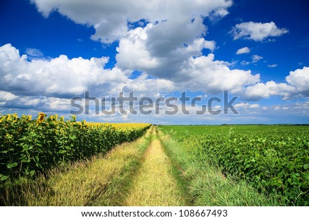 Country road through a field of sunflowers and soybeans field