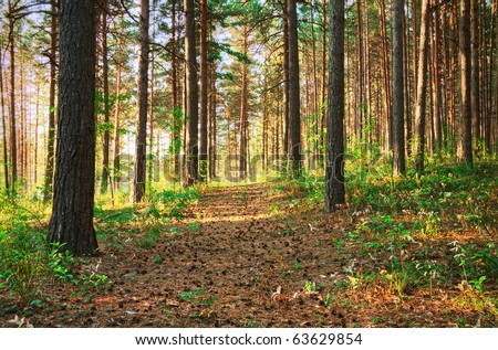 country road through a sunset forest - stock photo