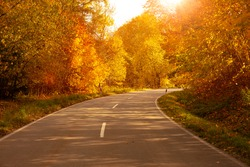 Country road through autumnal deciduous forest