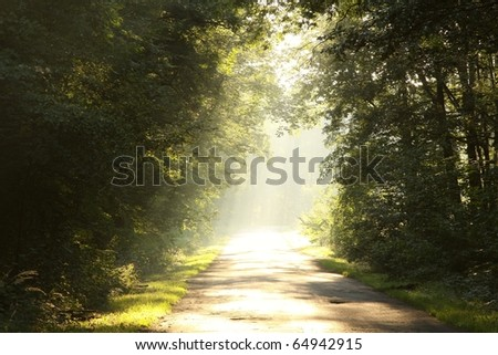 Country road through rich deciduous forest backlit by the rising sun.