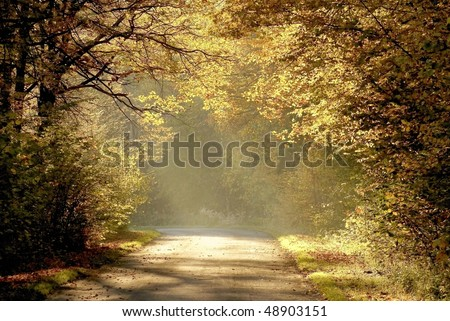 Country road through the autumn forest with oak trees backlit by the rays of the rising sun.