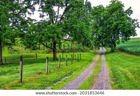 Country road through the farm. Rural road in farm garden. Farm garden road view. Farm rural road